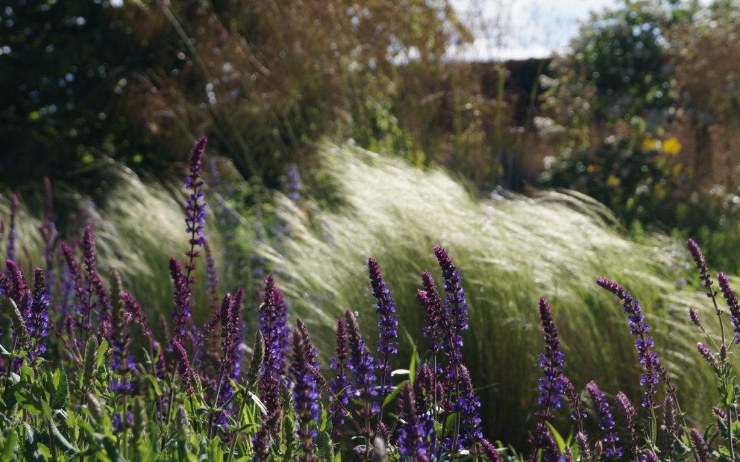 Comment aménager un jardin écologique