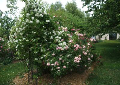 roseraie Fondettes 2