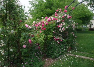 Une roseraie inspirée de Giverny