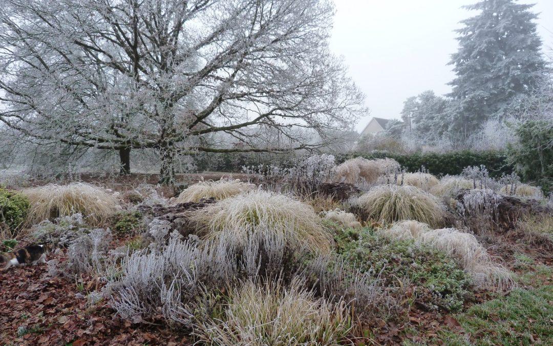 L'hiver au jardin, c'est beau!